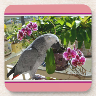 African Grey Parrot with Orchids Beverage Coaster