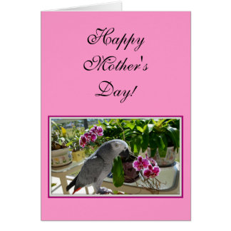 African Grey Parrot with Orchids Greeting Card