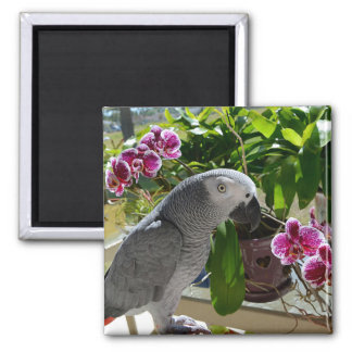 African Grey Parrot with Orchids Fridge Magnets
