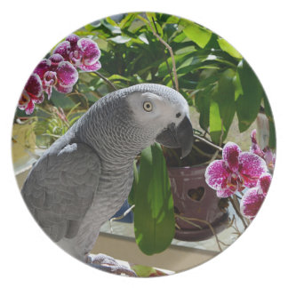 African Grey Parrot with Orchids Plates