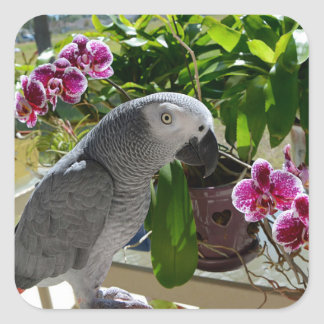 African Grey Parrot with Orchids Sticker