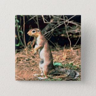 African Ground Squirrel 15 Cm Square Badge