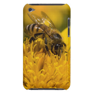 African Honey Bee With Pollen Sacs Feeding iPod Touch Case