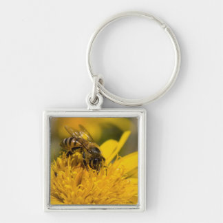 African Honey Bee With Pollen Sacs Feeding Silver-Colored Square Key Ring