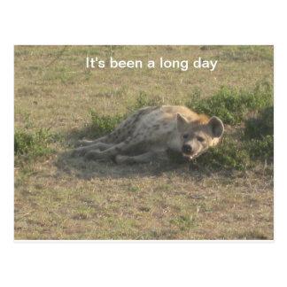 African Hyena Postcard