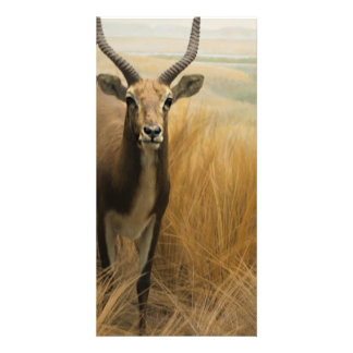 African Impala Picture Card