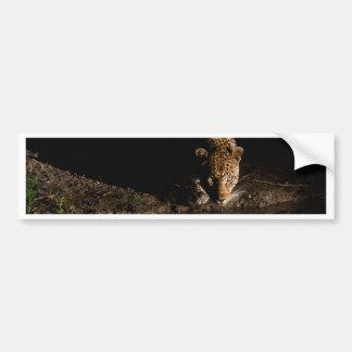 African Leopard Bumper Sticker