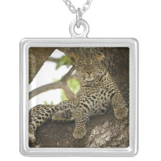African Leopard, Panthera pardus, in a tree in Square Pendant Necklace