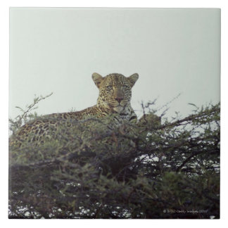 African leopard tile