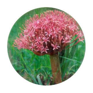 African Lily (Agapanthus Praecox), Mala Mala Cutting Boards