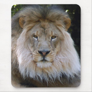 african lion 28 mouse pad