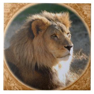 African Lion 6775e11x11fram-b Large Square Tile