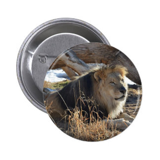 African Lion Buttons