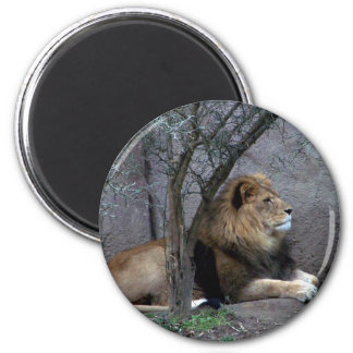 african lion by tree 6 cm round magnet