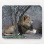 african lion by tree mouse pad