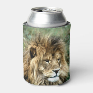 African lion can cooler