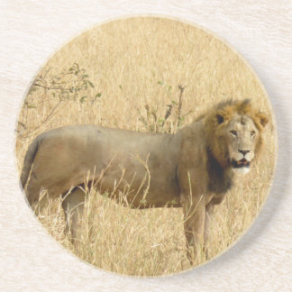 African Lion Drink Coaster
