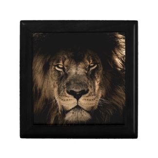African Lion Gift Box