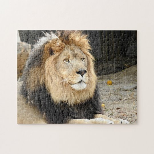 African Lion Jigsaw Puzzle