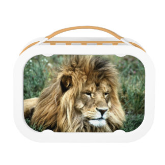 African lion lunchbox