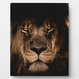 african lion mane close eyes plaque