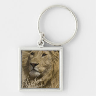 African Lion, Panthera leo, Portrait of a Keychains