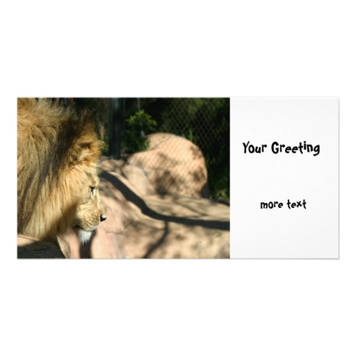 African Lion Picture Card
