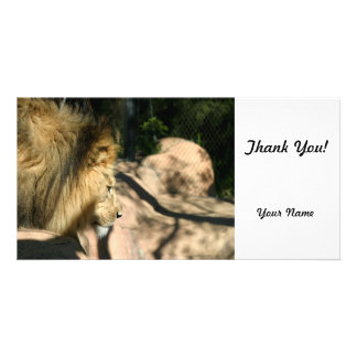 African Lion Personalized Photo Card