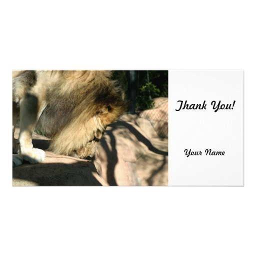 African Lion Photo Card Template
