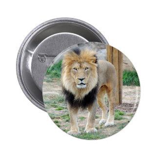 African Lion Pins