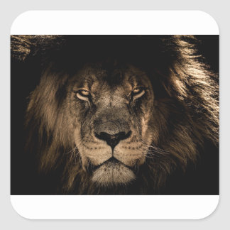 African Lion Square Sticker
