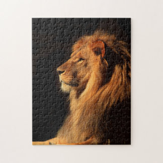 African Male Lion; Wildlife Puzzles by Steven Holt