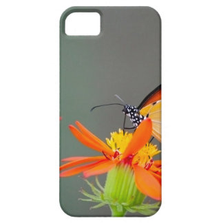 African Monarch butterfly on orange flower iPhone 5 Cases