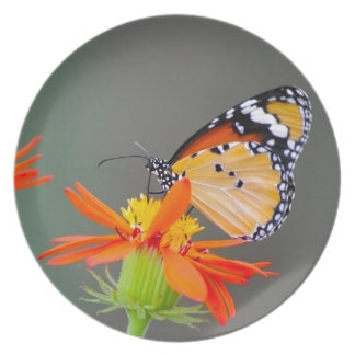 African Monarch butterfly on orange flower Plate