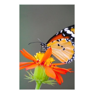 African Monarch butterfly on orange flower Stationery