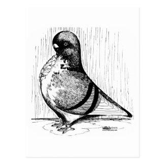African Owl Pigeon 1978 Postcard