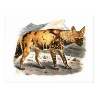 African Painted Wolf Postcard