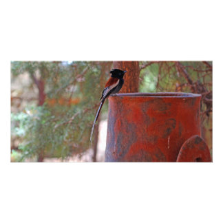 African Paradise Flycatcher Customised Photo Card