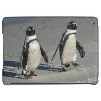 African penguin (Spheniscus demersus)2