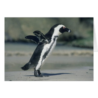 African Penguin, (Spheniscus demersus), coming Greeting Card