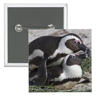 African Penguins, formerly known as Jackass 2 15 Cm Square Badge