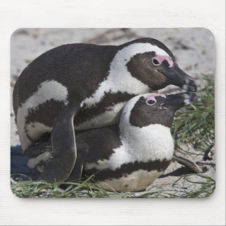 African Penguins, formerly known as Jackass 2 Mouse Pad
