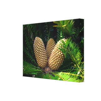 African Pine Seed Cones, Canvas Print