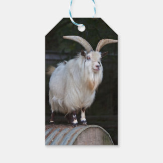 African Pygmy Goat Gift Tags