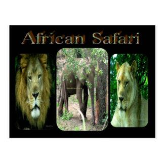 African Safari Postcard