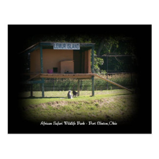 African Safari Wildlife Park Lemur Postcard