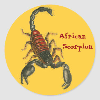 African Scorpion Sticker