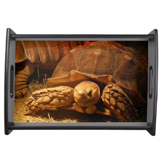 African Spurred Tortoise Serving Tray