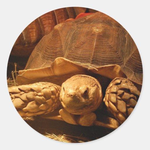 African Spurred Tortoise Sticker