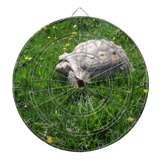 African sulcata tortoise dartboard